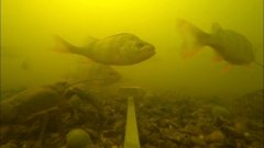 Эксперимент | реакция рыбы на жмых | сколько здесь рыбы: окунь, щука, карась, плотва | рыбалка 2020