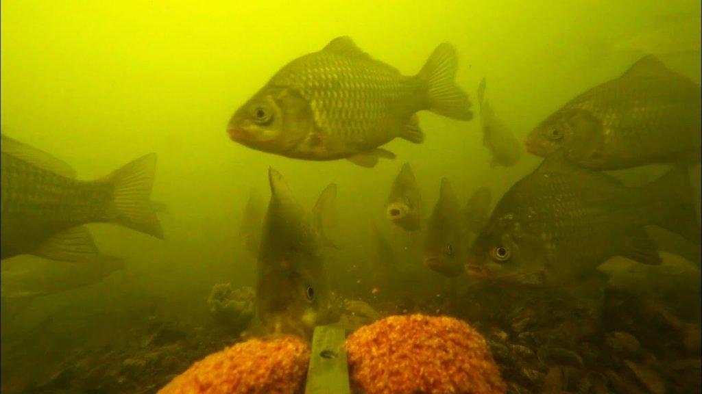Реакция рыбы на жмых: кукуруза + чеснок