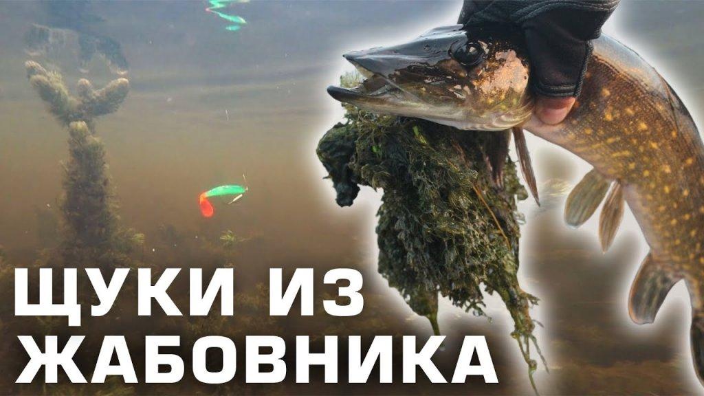 Ловля ЩУКИ В ЖАБОВНИКЕ осенью / огруженный офсетник своими руками