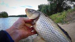 ВОТ ЭТО РЫБАЛКА! Ловля Сазана, Буффало, Леща осенью. Река Ахтуба 2020г