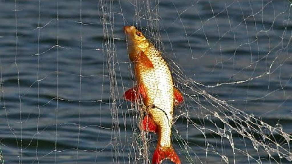 Проверка сетей / ведро рыбы за раз /  рыбалка 2020. Республика коми.