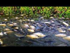 Когда нашел протоку из детства. Нерест рыбы
