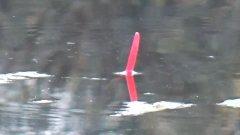 Ловля на пуфик  Рыбалка на поплавок осенью
