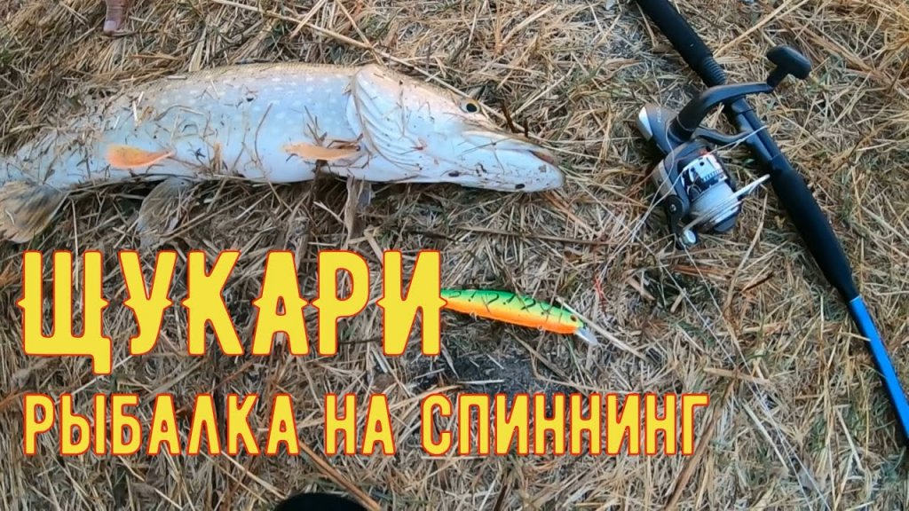 Рыбалка на спиннинг в пойме реки Ахтуба. Жор щуки. Ахтуба октябрь 2020