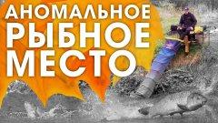 КАРП на фидер осенью на реке / ВСЕ особенности и ТОНКОСТИ ЛОВЛИ