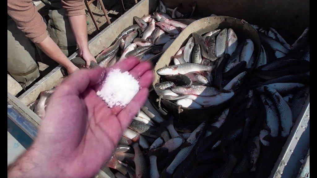 Показал браконьерский порошок для рыбалки