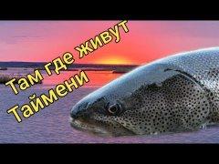 Там, где живут Таймени. Осень 2020. Подводная съемка. Сахалинская рыбалка & Sakhalin fishing9