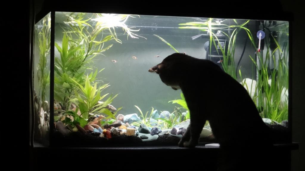 Платная рыбалка - ловля в аквариуме? О наболевшем