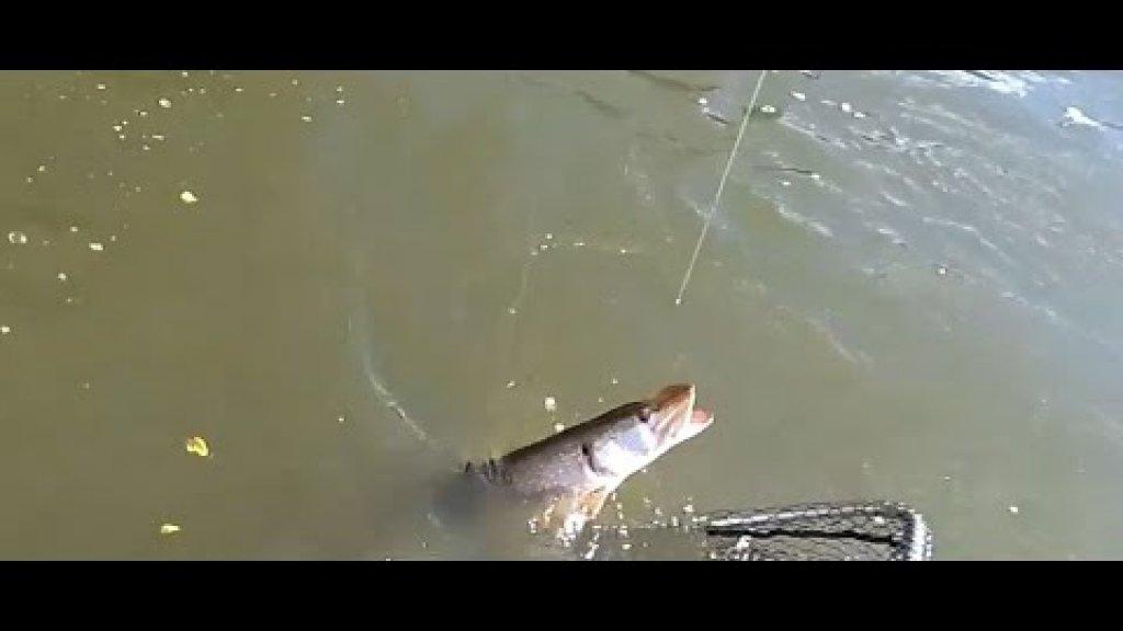 Рыбалка на оби 2020. Судак и щука. Часть 3.