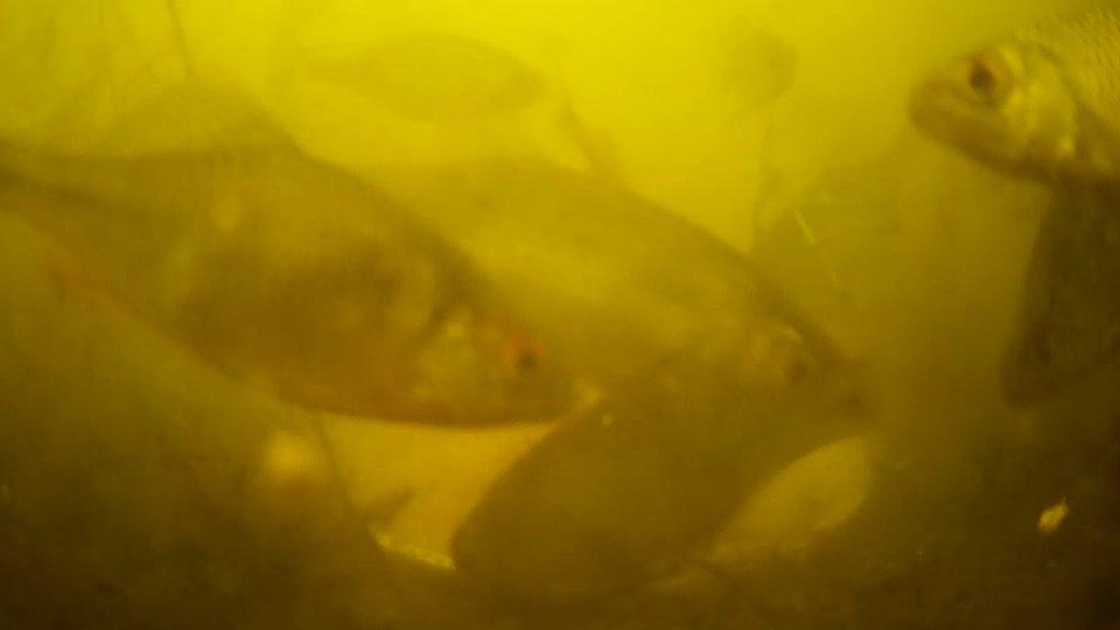 HD video подводная съемка  карась окунь плотва тарань
