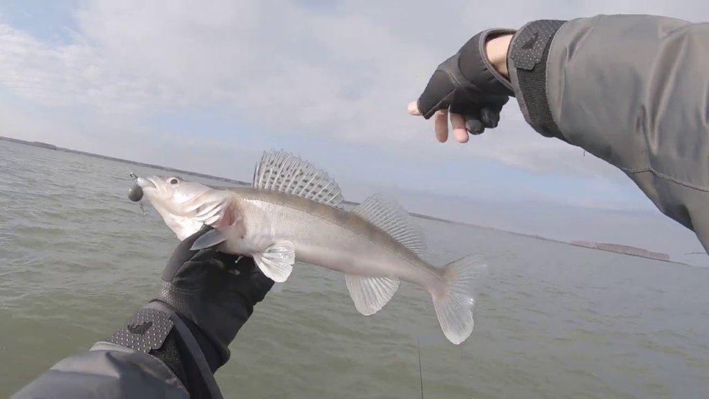Судак на крупный силикон в конце октября. Рыбалка на Обском Водохранилище 2020