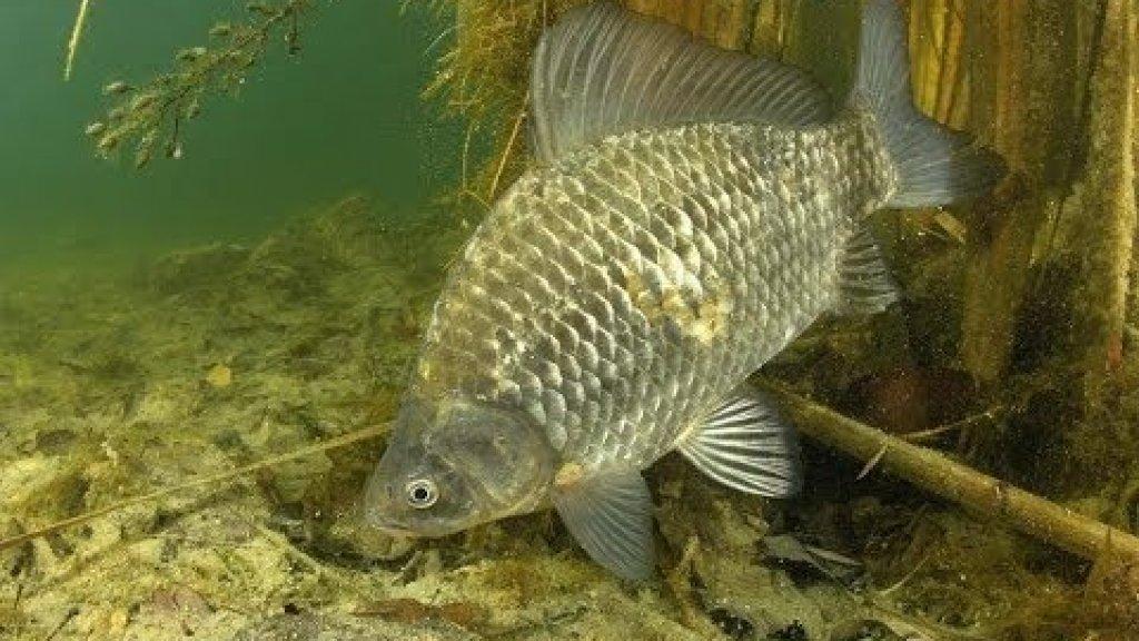 Съемка под водой на Рыбалка