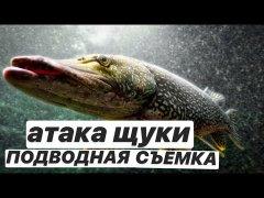 Атака щуки,подводная съёмка,ловля щуки