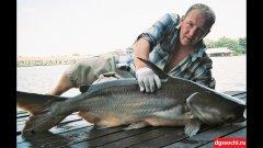 Рыбалка в Таиланде. Бангсамран фишинг парк