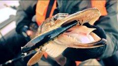 Первый лед отменяется!!! Ловим щуку на ладожском озере.рыбалка в ленинградской области.