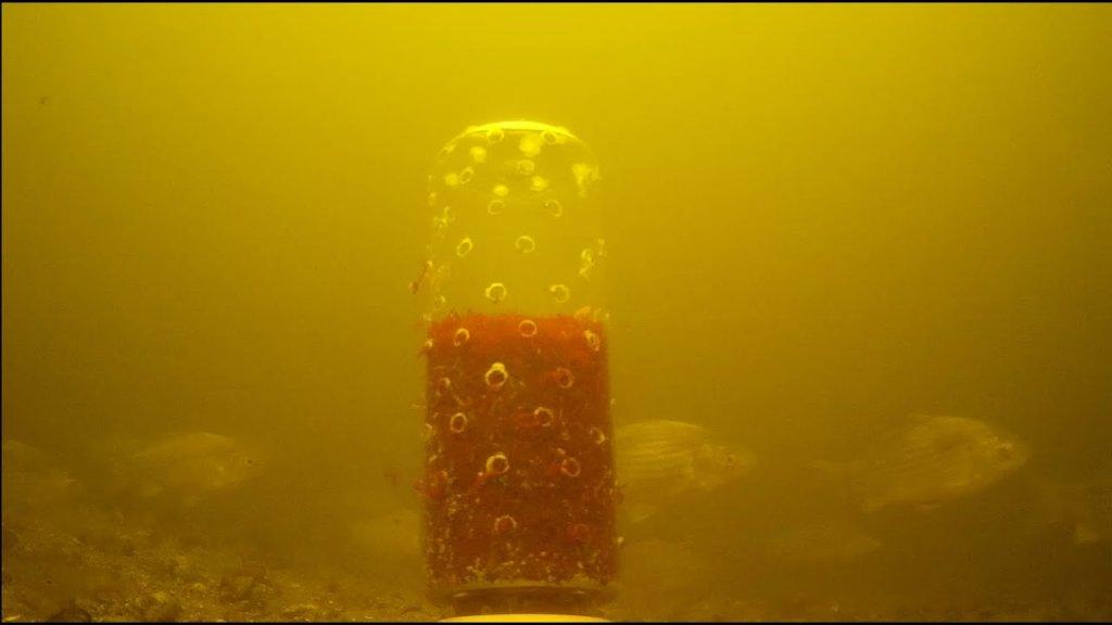 Реакция рыбы на пол килограмма мотыля