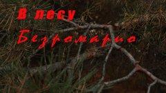 В лесу Безромарио.  Эмбиент.🍁🍂🌲🌳🍄