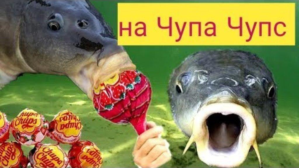 Реакция рыбы на Chupa Chups Чупа Чупс подводная съёмка раки сладкоежки