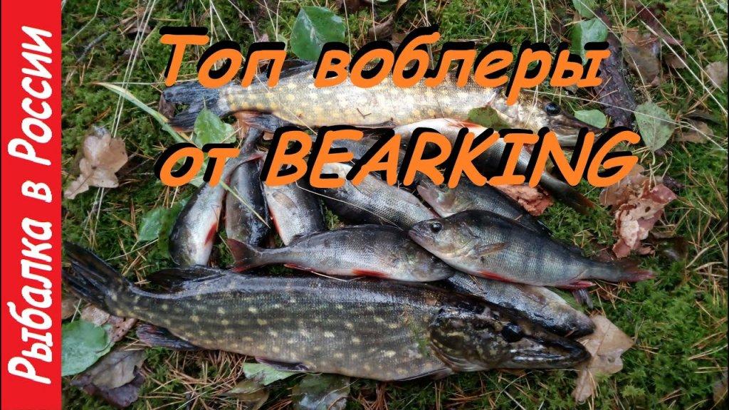 Топ воблер от Bearking.  Ловля щуки и окуня по лапухам.  Спиннинг поздней осенью.