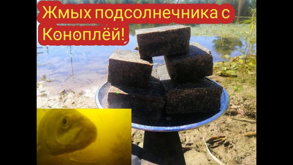 Проверяем реакцию рыбы на жмых подсолнечника с добавлением конопли XXX 2020
