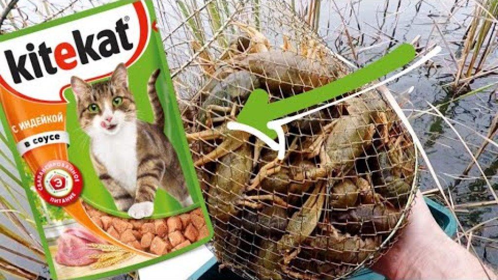 Ловлю раков на кошачий корм. Съёмка под водой