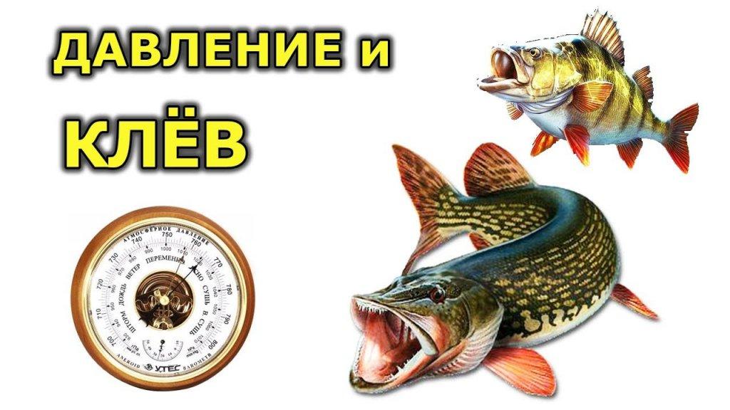 Давление для рыбалки зимой и летом. При каком давлении клюет рыба