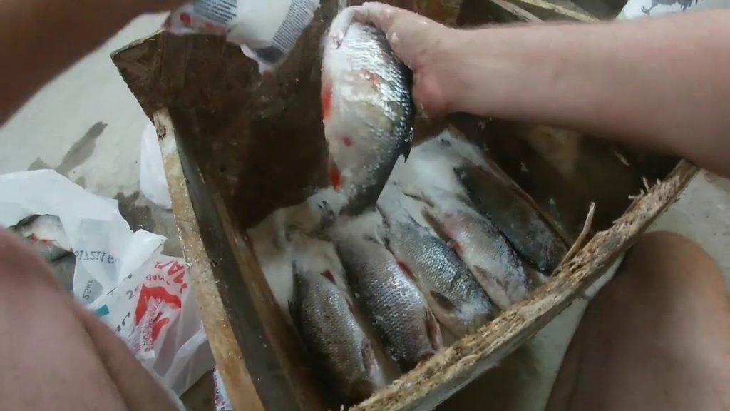 Сухой посол рыбы. Язь засоленный в колодке.