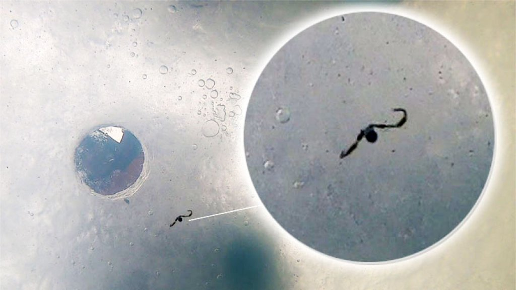 микро балда самая уловистая зимняя снасть на окуня и плотву