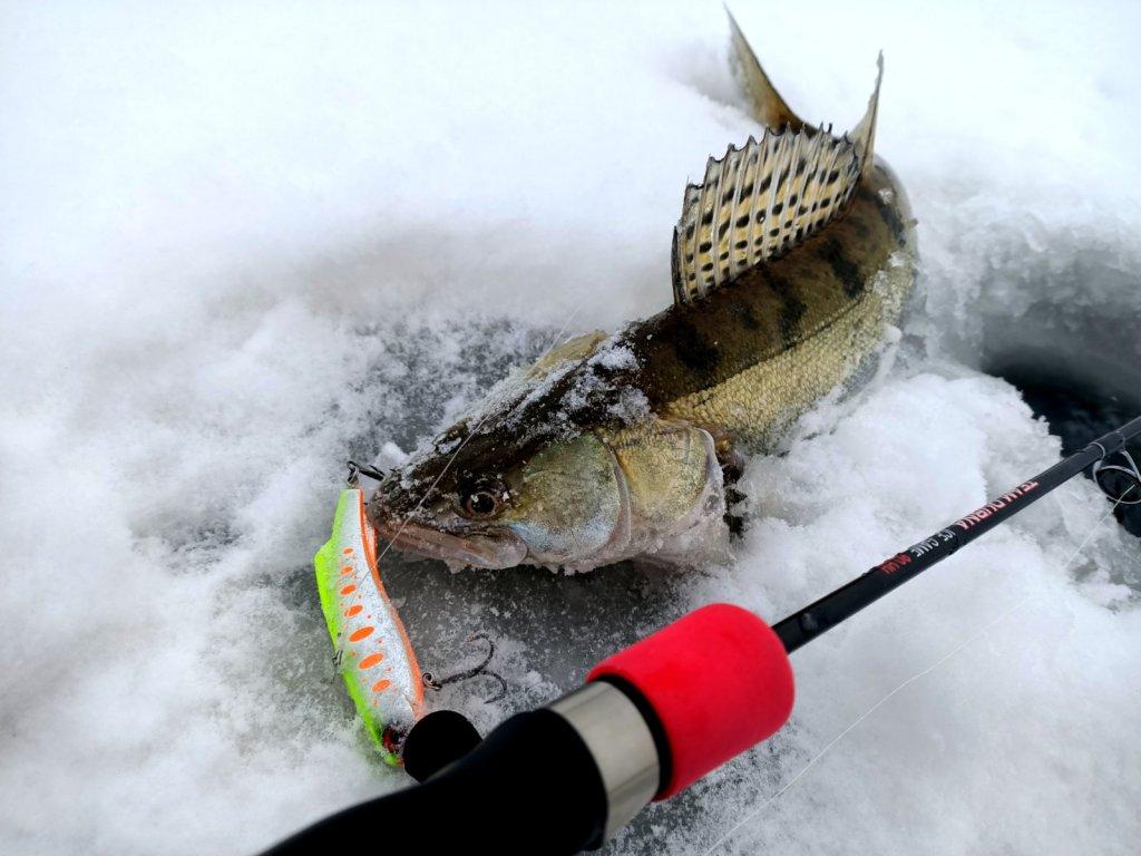 Рыбу ловит не приманка, а рыболов!