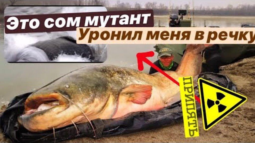 СОМ МУТАНТ УТАЩИЛ МЕНЯ В РЕКУ. Река Припять - словил огромного сома