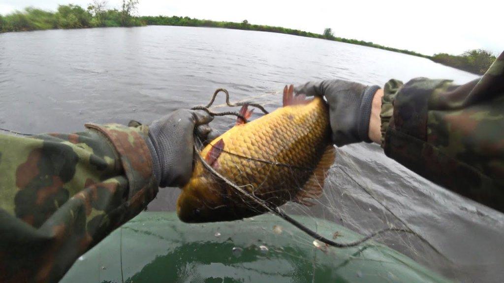Проверка сетей. Сети стояли пару часов. Ловля карася и другой рыбы на севере.