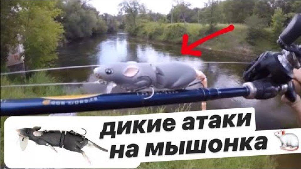 Дикие атаки на мышь 🐭