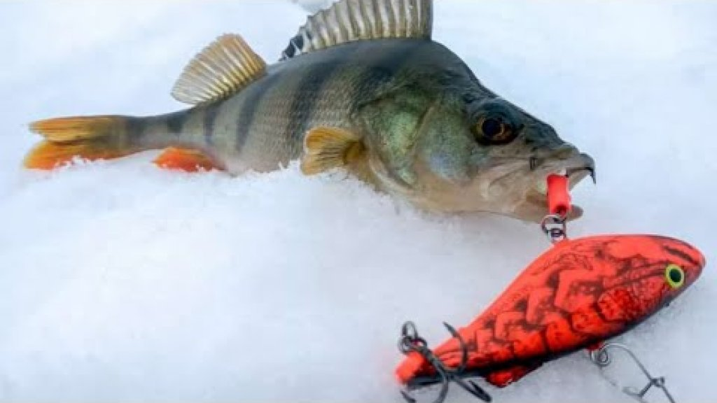 Рыбалка на жерлицы / зимняя рыбалка