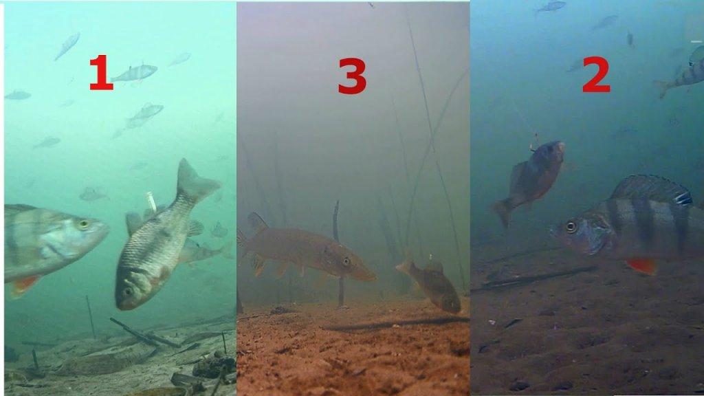 Как ПРАВИЛЬНО Насадить Живца на Жерлицу! Подводная съемка