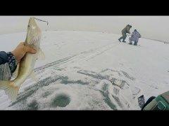 Судак по первому льду. Обское водохранилище
