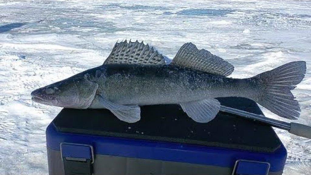 Рыбалка на судака зимой 2020, или же охота и поиски клыкастого на обском водохранилище!