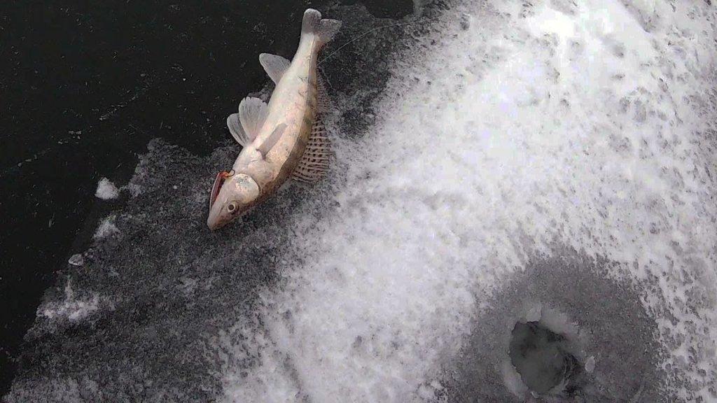 Судак на вибы и блесны. Отчет за декабрь. Рыбалка 2020 на Обском Водохранилище.