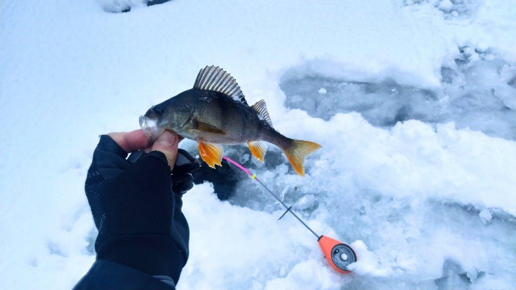 Рыбалка 2021 на карьере в Ленинградской области.