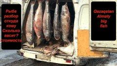 Алматинцы в шоке! репортаж про рыбу