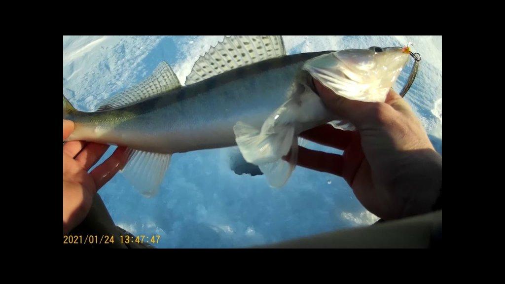 Рыбалка на Судака. На Обском Водохранилище.