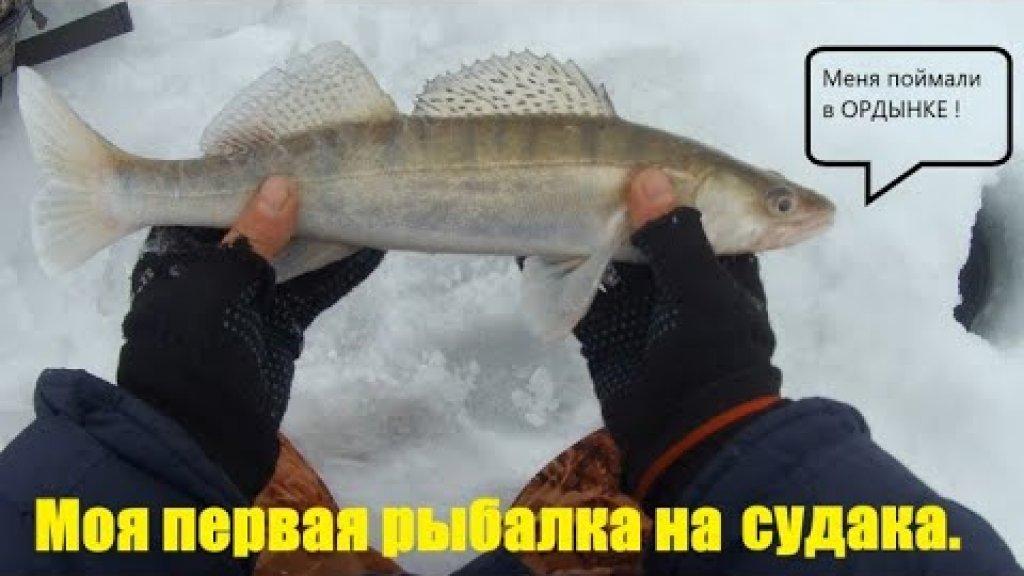 Зимняя рыбалка на судака. Новосибирское водохранилище. Ордынка.