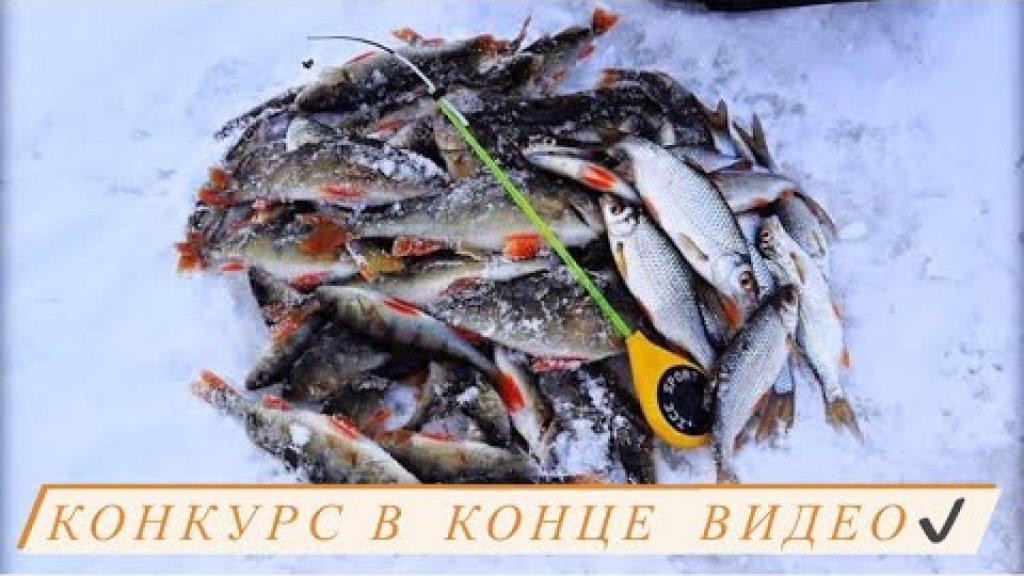 РЫБАЛКА И КОНКУРС! Зимняя рыбалка стоила того