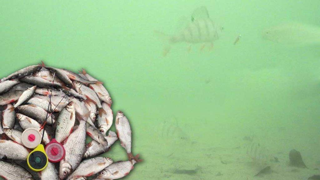 Ловля плоты зимой на мормышку со льда, подводная съёмка