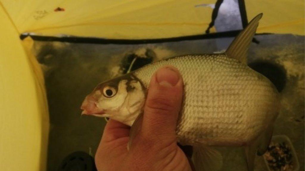 Крупный подлещик клюёт на самодельное тесто. Короткая рыбалки и экспромт-видео.