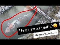 Засекли рыбу в реке Припять. Припять 2021