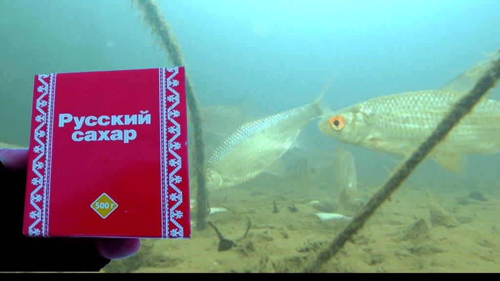 Реакция рыбы на САХАР  Подводное видео