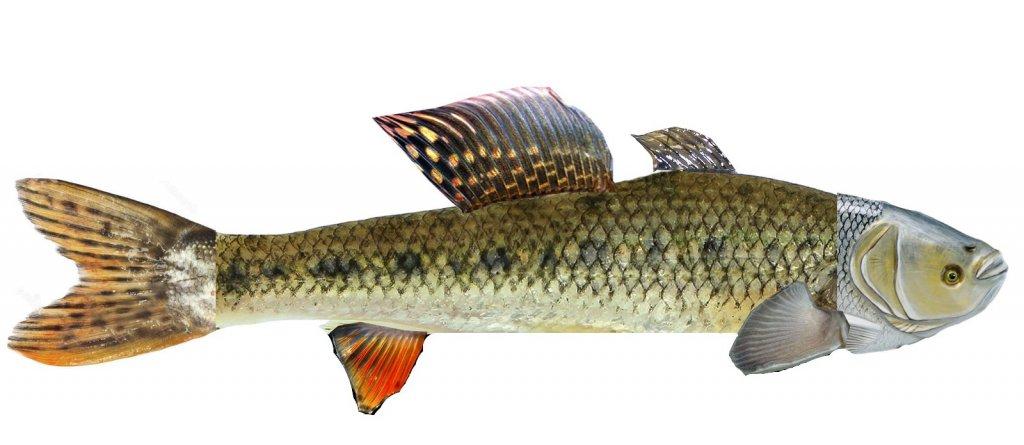 Конкурс. Угадай рыбу
