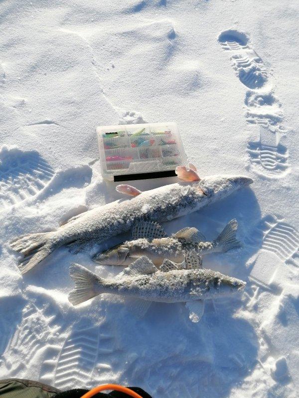 Морозные рыбки)