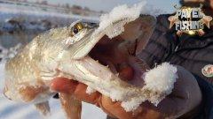Поймал щуку ГОЛЫМИ РУКАМИ. Зимняя рыбалка 2021. Обзор спиннинга и катушки Фаворит X1.