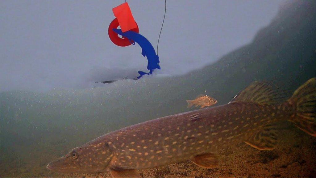 Щука Сошла с Ума! Рыбалка на жерлицы! Подводная съемка.